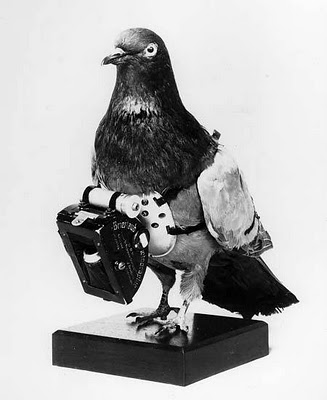 Carrier pigeon (via Nathan Abels)
