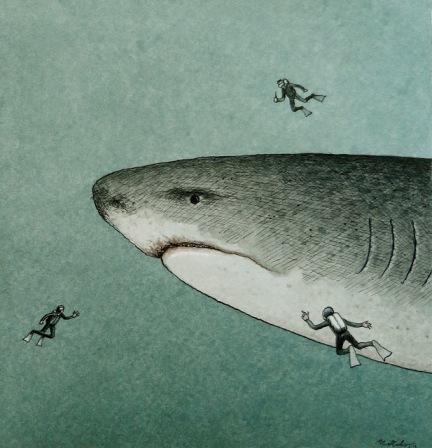 Shark by Franco Matticchio (via Animalarium)
