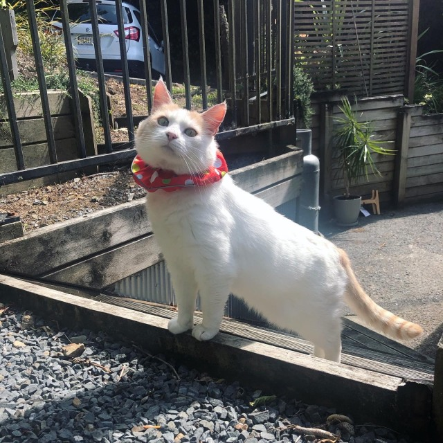 Jerry in clown collar